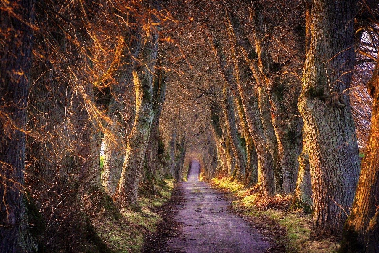 Symbolfoto Wege im Wald (Bildquelle: Pixabay)